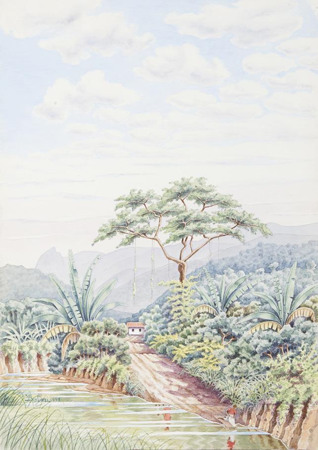 Paesaggi brasiliani
