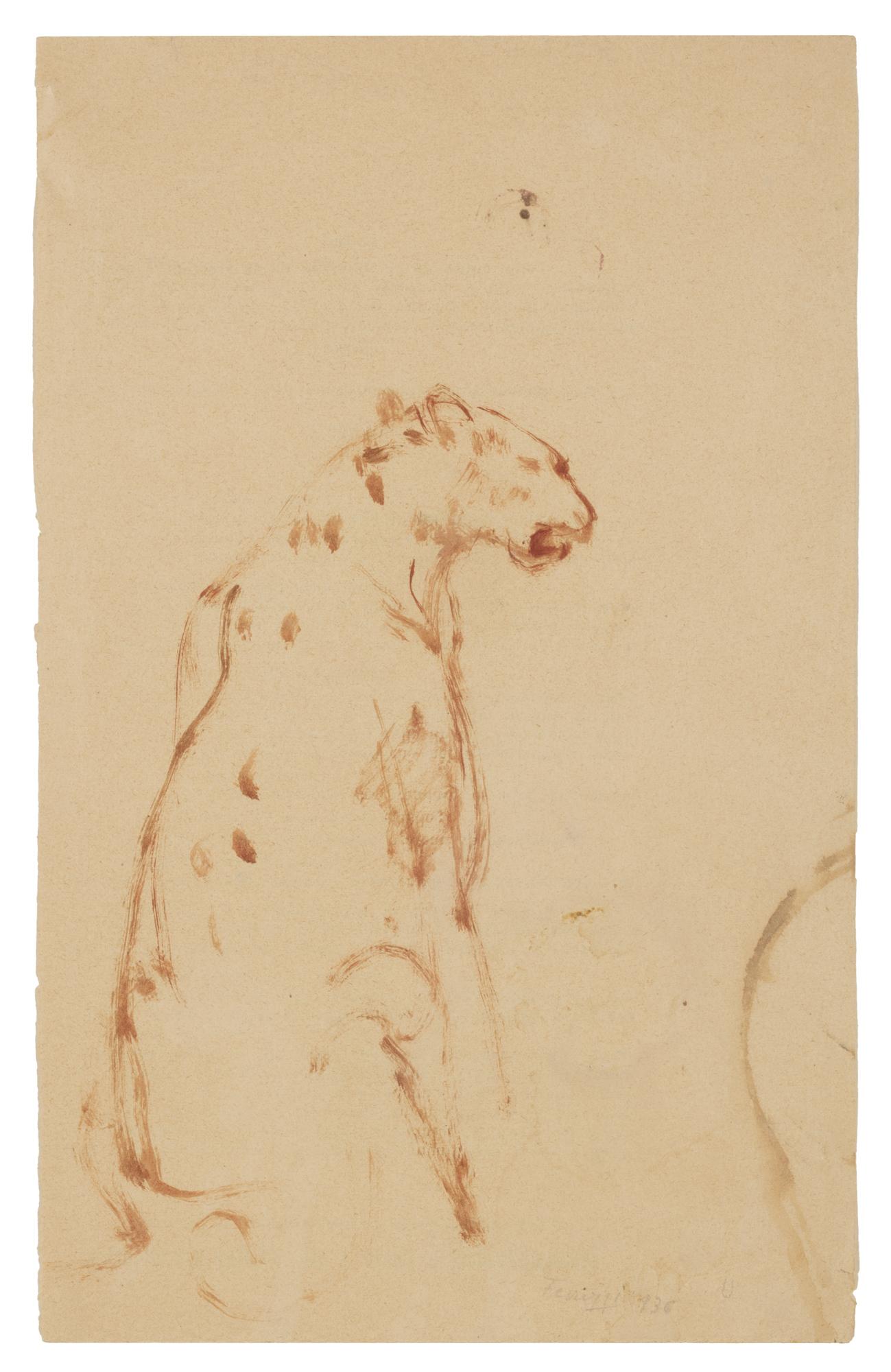 Leopardo, 1936