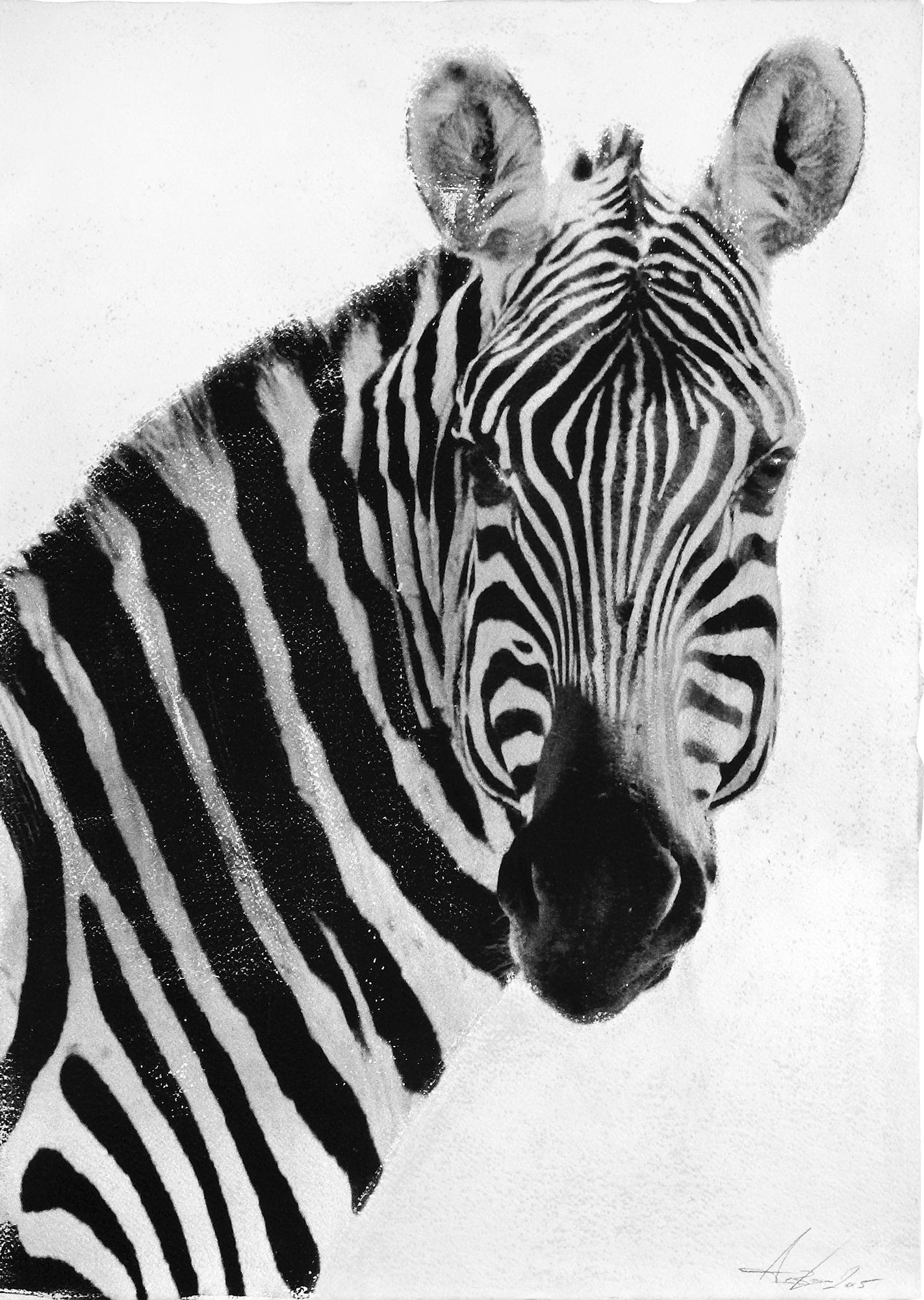 Zebra, 2015