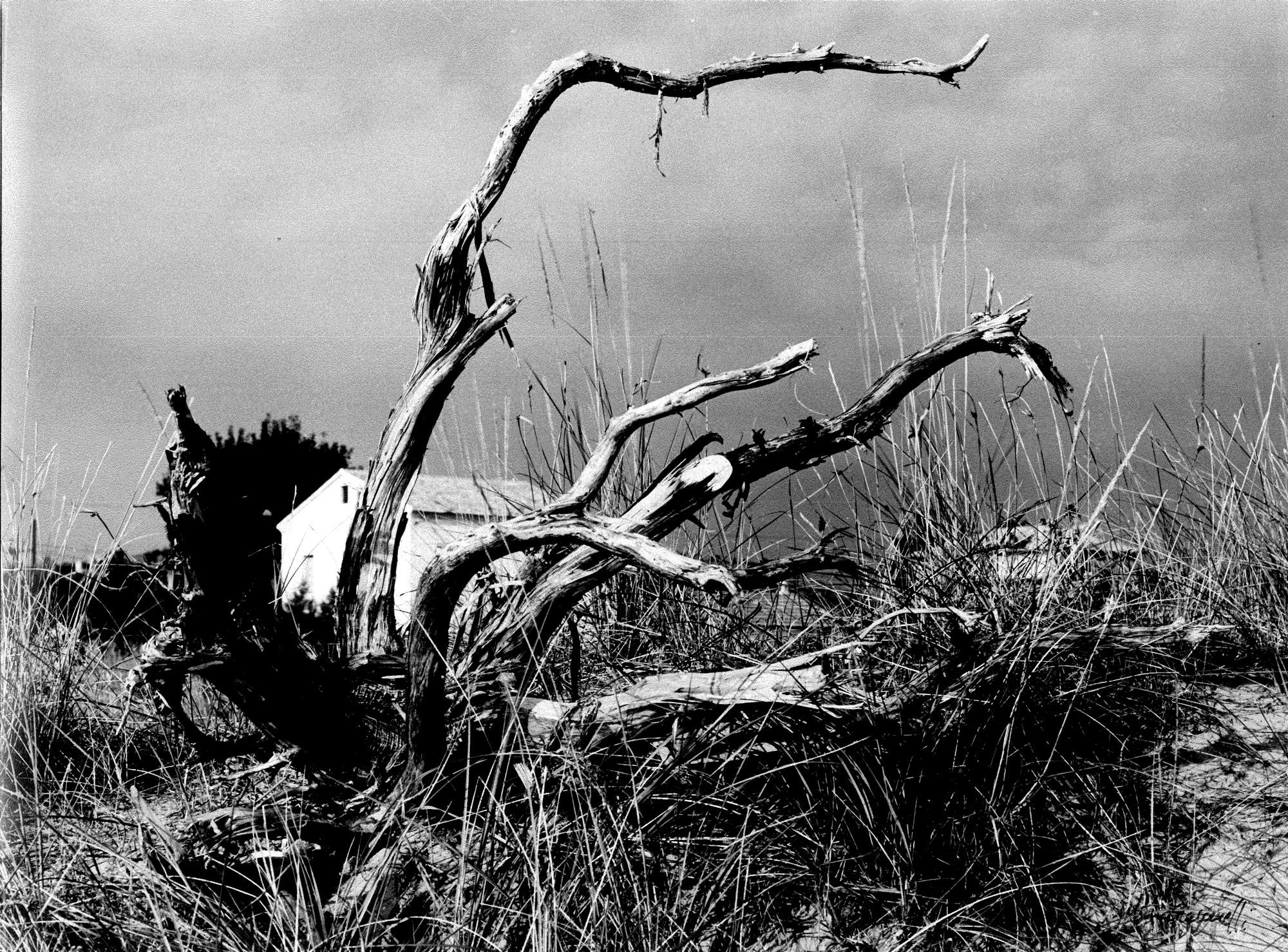 La casa e l'albero, 1956