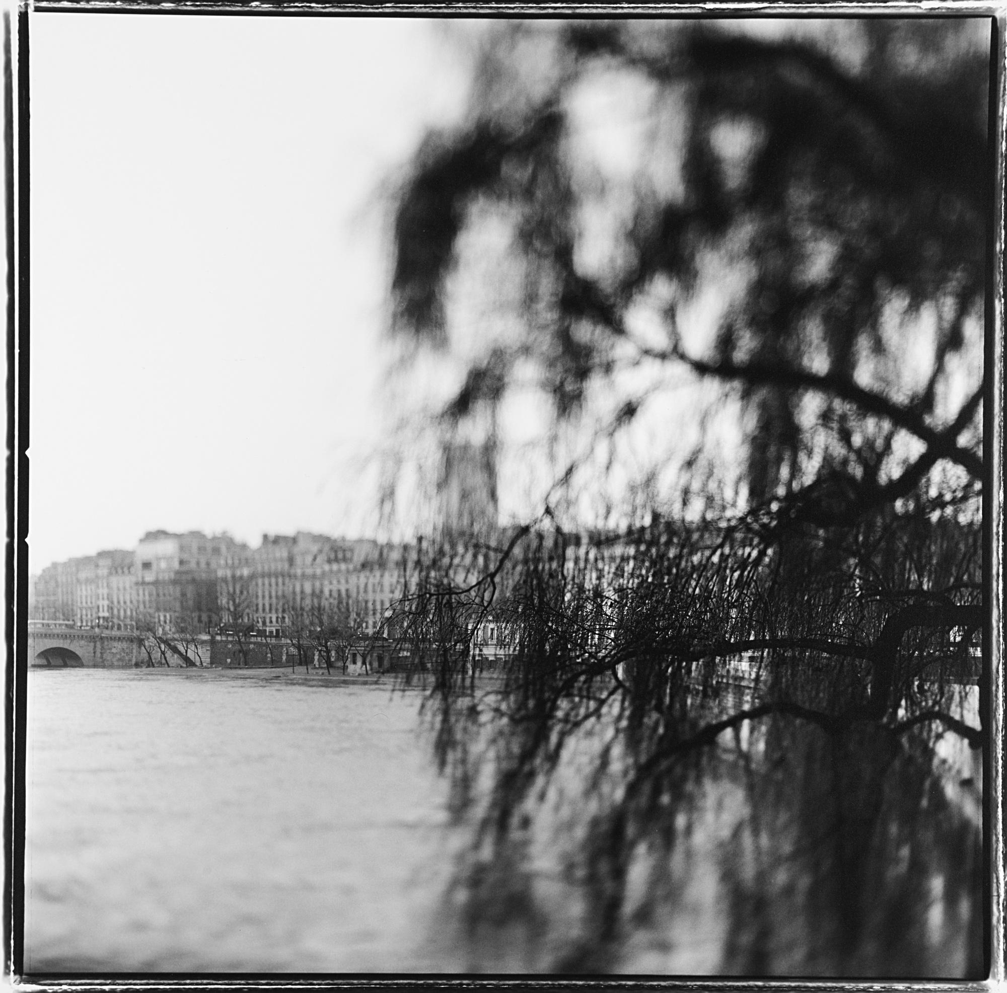 Oldest tree in Paris, 1999