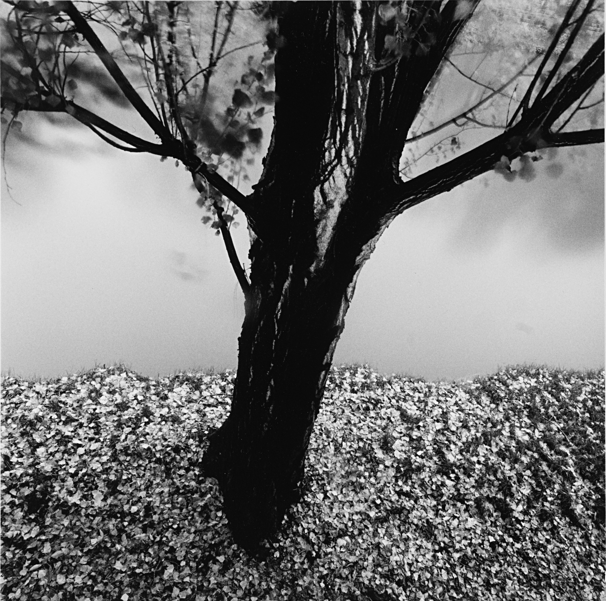 River Willow, Study 2, Strasbourg, France, 1993