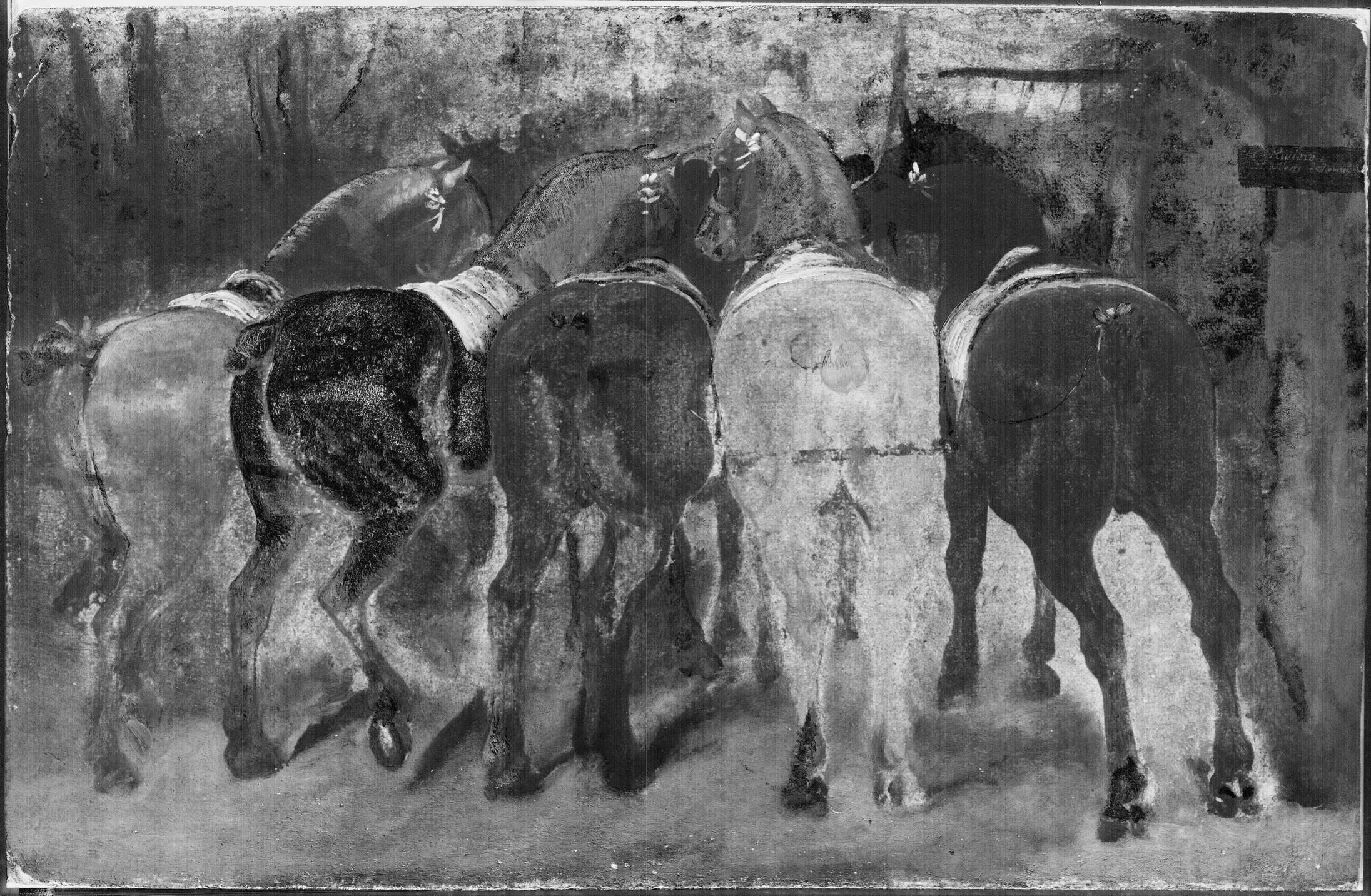 Cinque cavalli visti dalla groppa