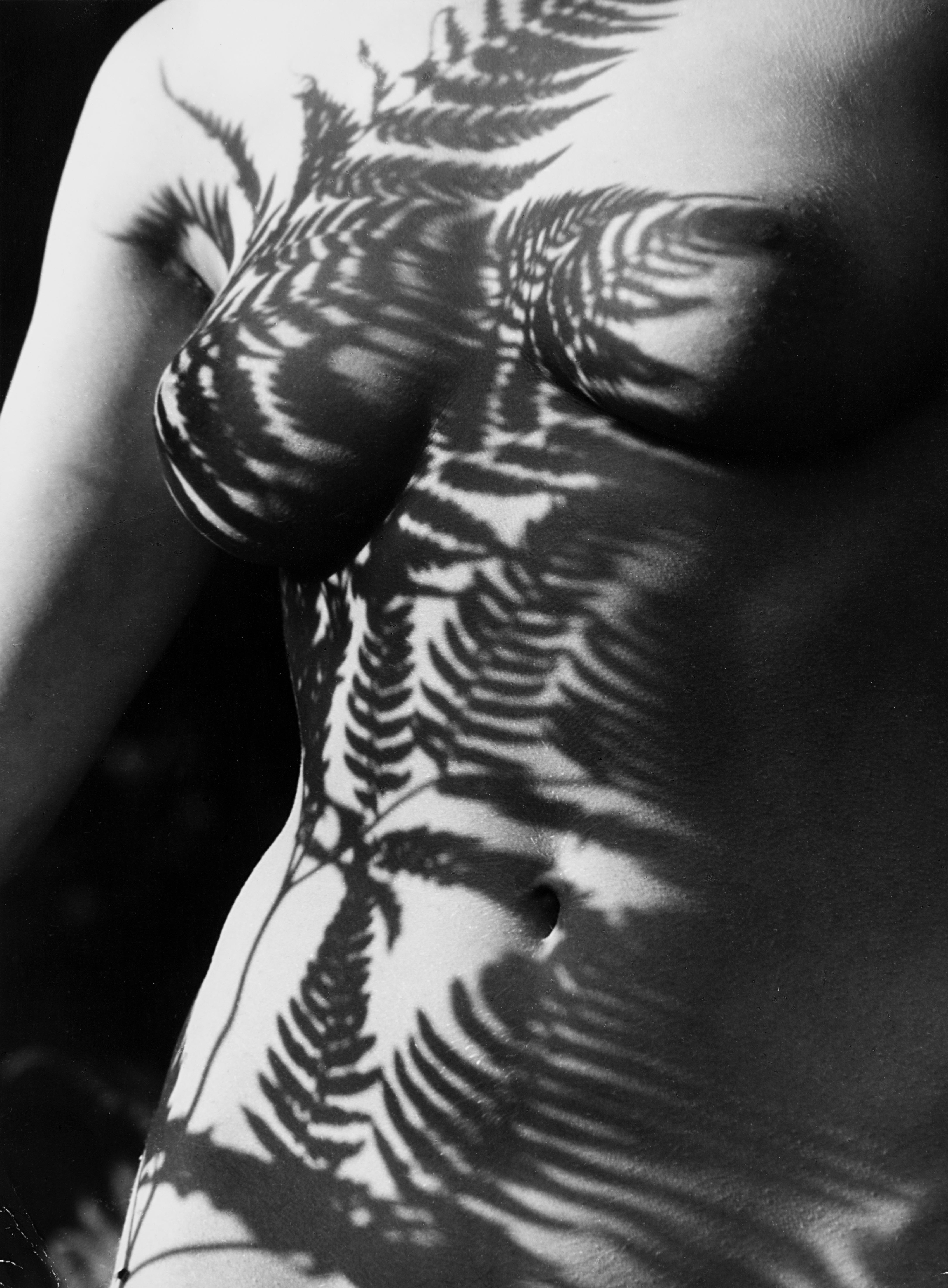 Fern shadow, anni 1980