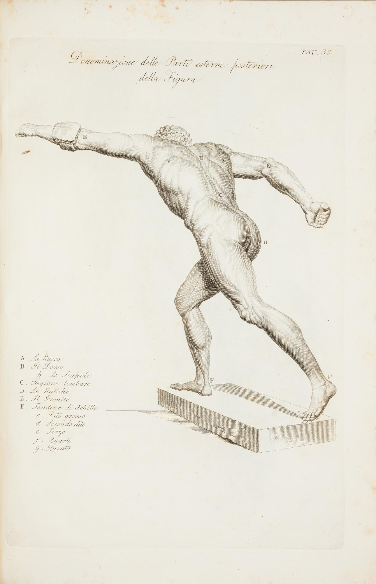 Anatomia per uso dei pittori e scultori